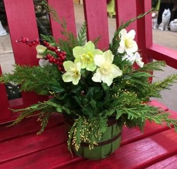 Holiday Plant Arrangements