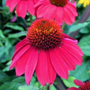 Perennials for late summer & fall