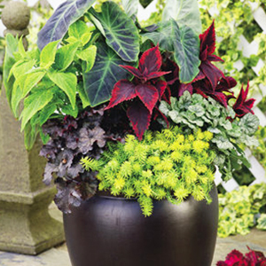Custom container gardens created just for your home or business!