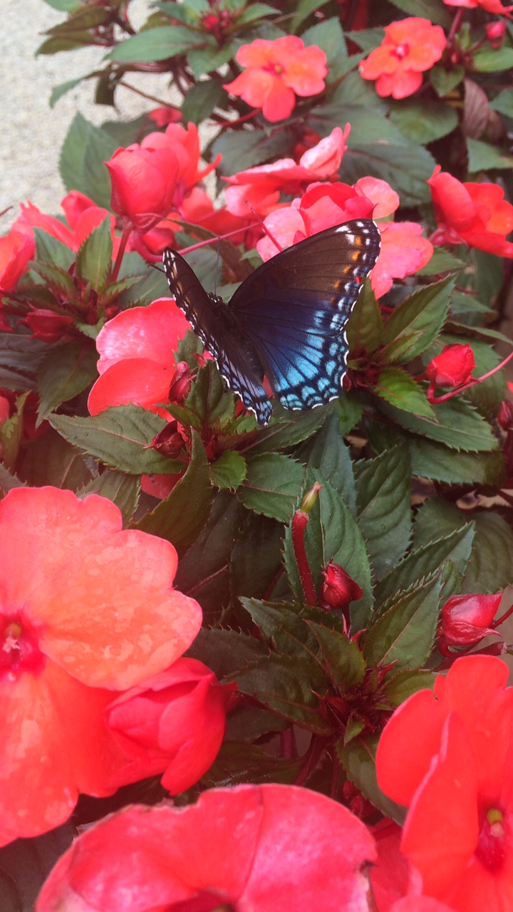 Attract Butterflies to your Garden - Graf Growers