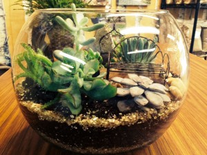 Terrarium and Succulent Bowl Workshop with Wine @ Graf's Garden Shop | Akron | Ohio | United States