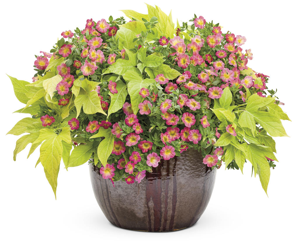 Container gardening tips and tricks graf growers for Flower pots with plants