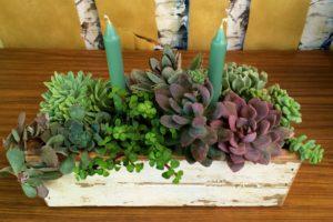 Succulent Barnwood Centerpiece Workshop @ Graf Growers | Akron | Ohio | United States