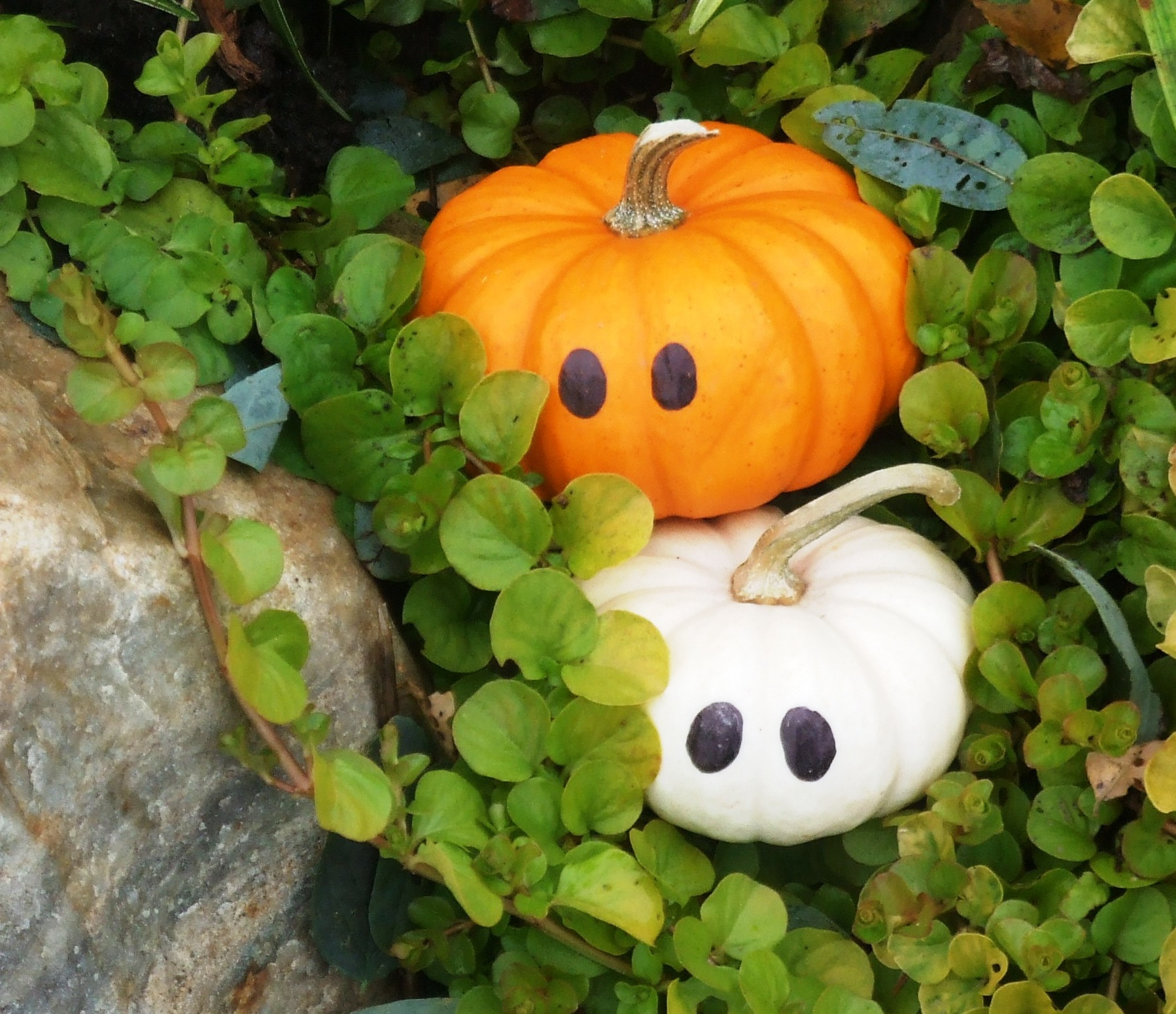 Hanging Pictures On Walls Without Nails 100 Use White Pumpkins To Decorate How To Make A Pumpkin