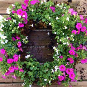 Living Wreath Workshop @ Graf Growers | Akron | Ohio | United States