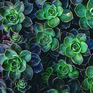 Succulent Spot