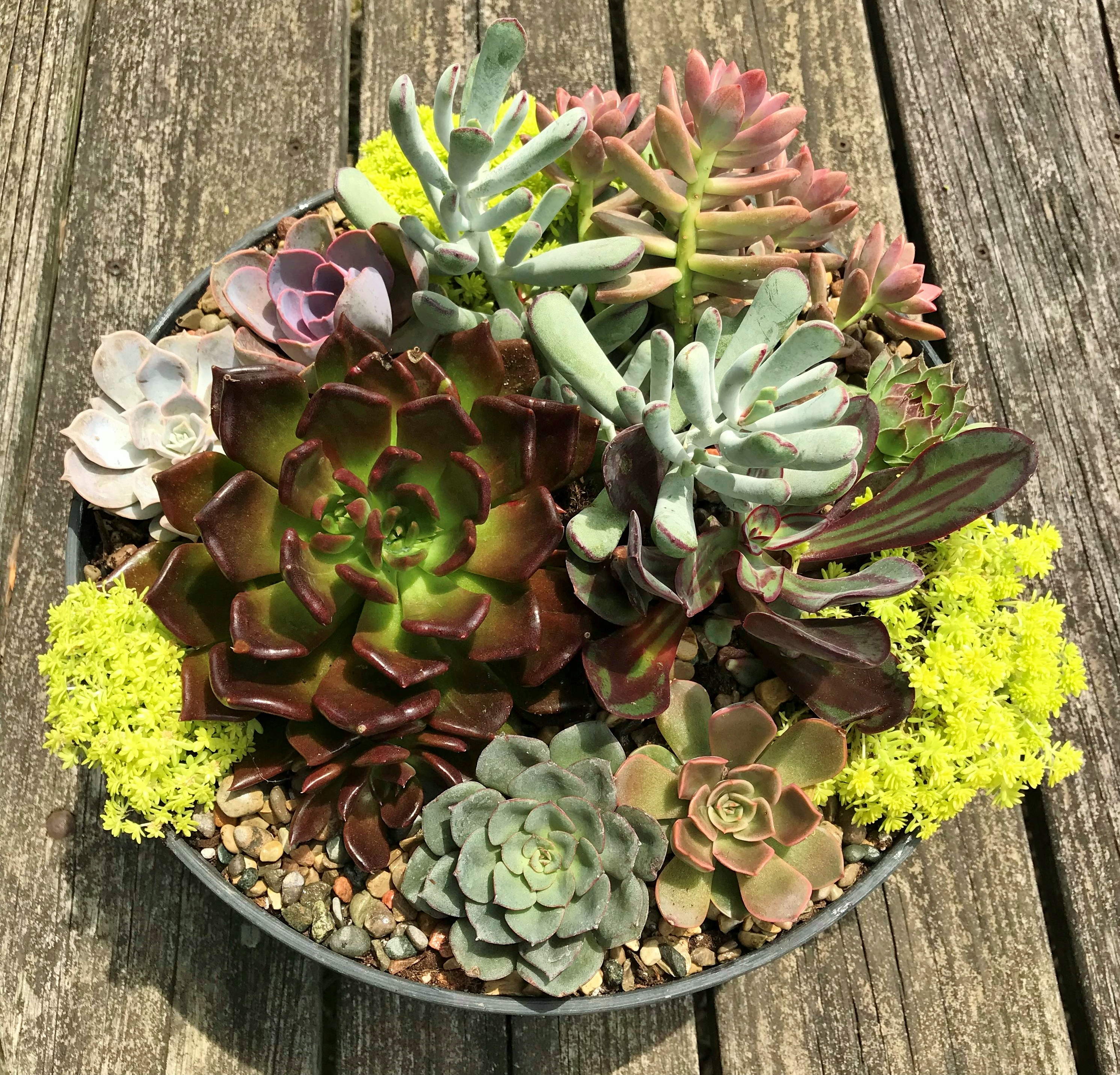 Succulent Garden 101 with Potting - Graf Growers