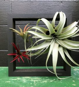 Air Plant Holder Workshop