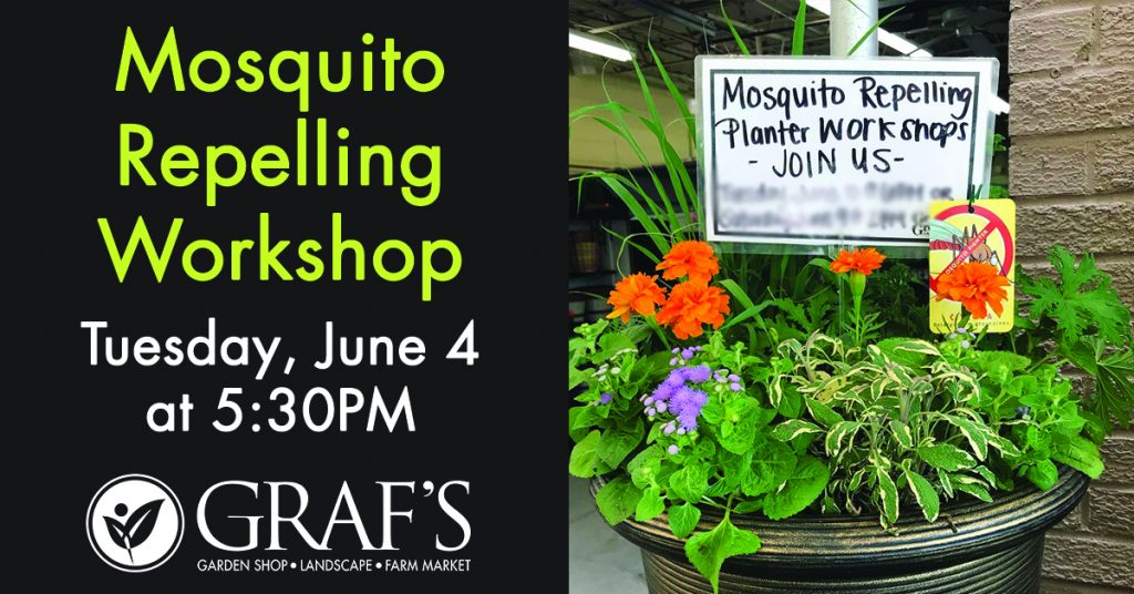 Mosquito Repelling Workshop