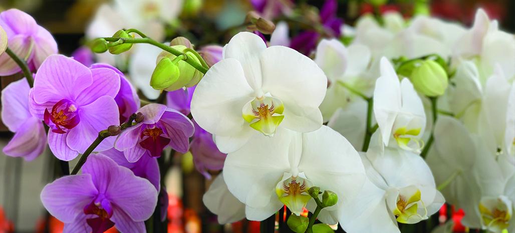Orchid Slider