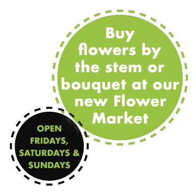 Flower Market open Friday, Saturday and Sunday