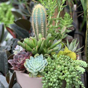 succulent 101 houseplants workshop