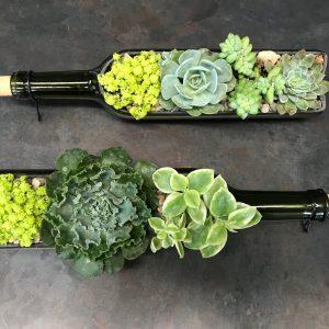 wine bottle succulents house plants