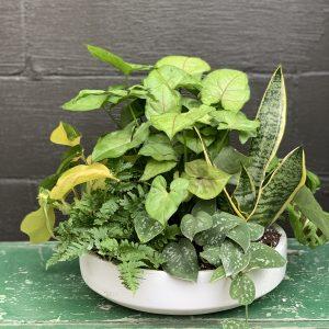 low light planter bowl house plants