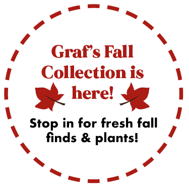 Graf's Fall Collection