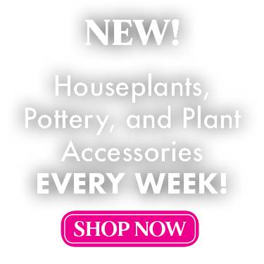 New Houseplants Every Week