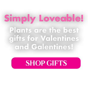 Simply Loveable! Plants are the best gifts for Valentines and Galentines!